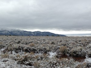 Snow on the sagebrush